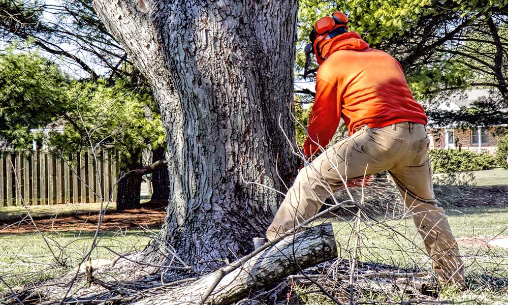Trained, Certified, Qualified Tree Removal Experts