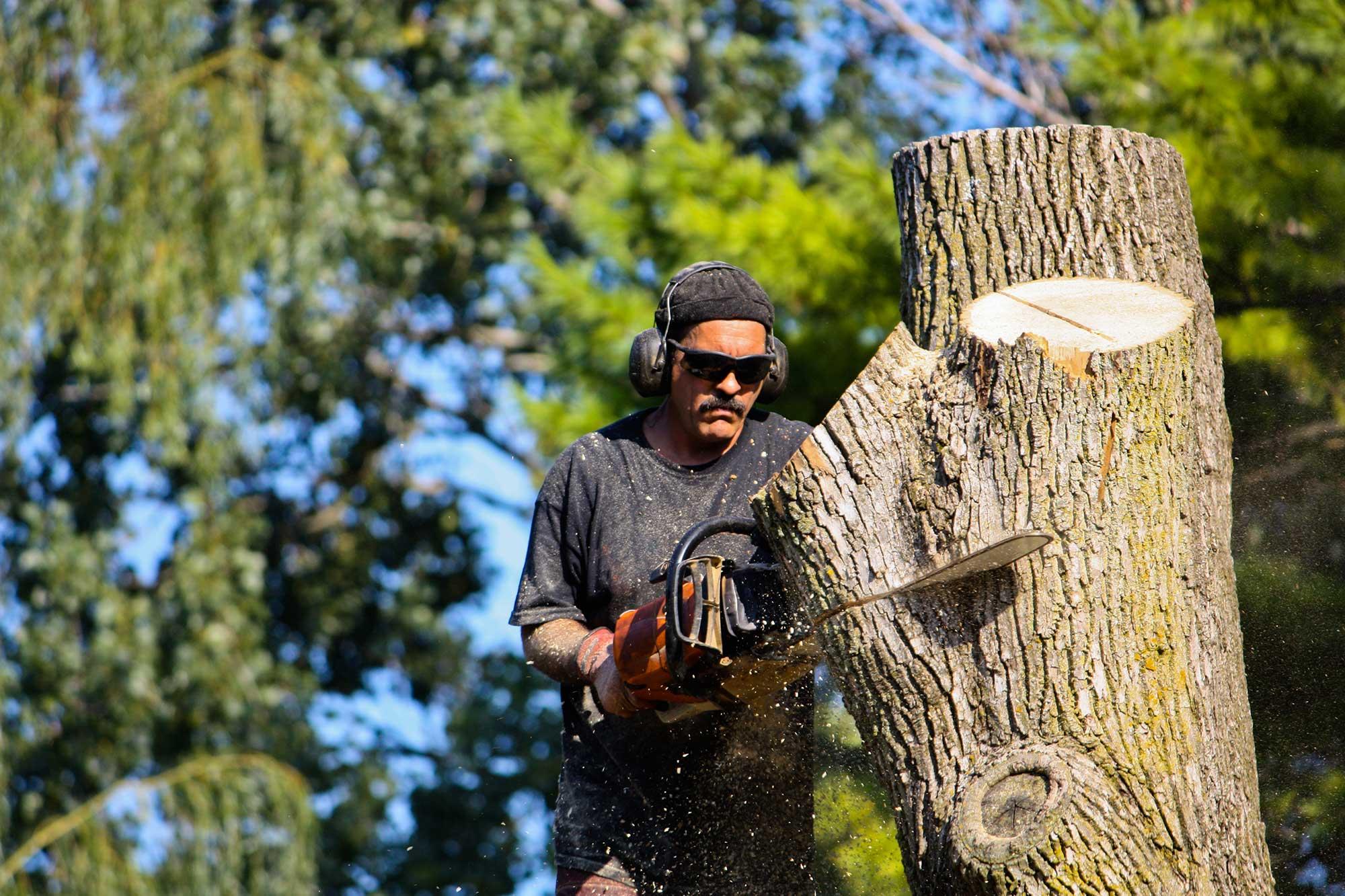 Hoppe Tree Service Tree Removal